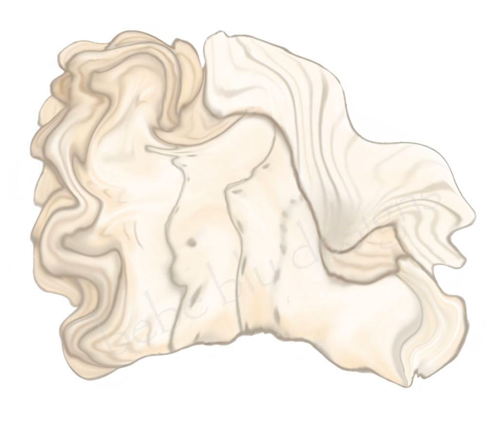 Conch Shell 2