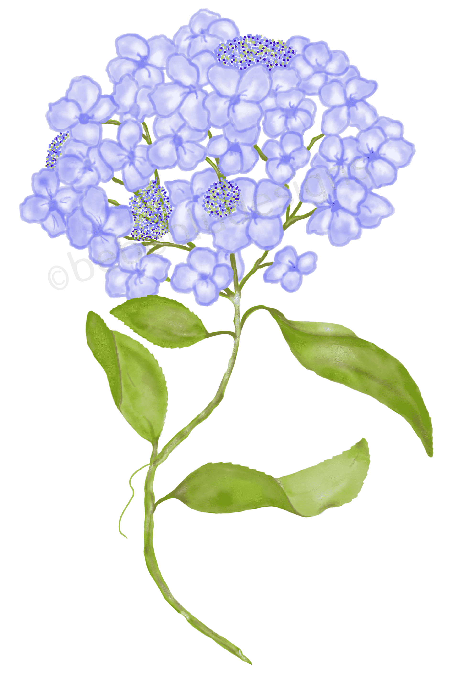 Hydrangea with beads