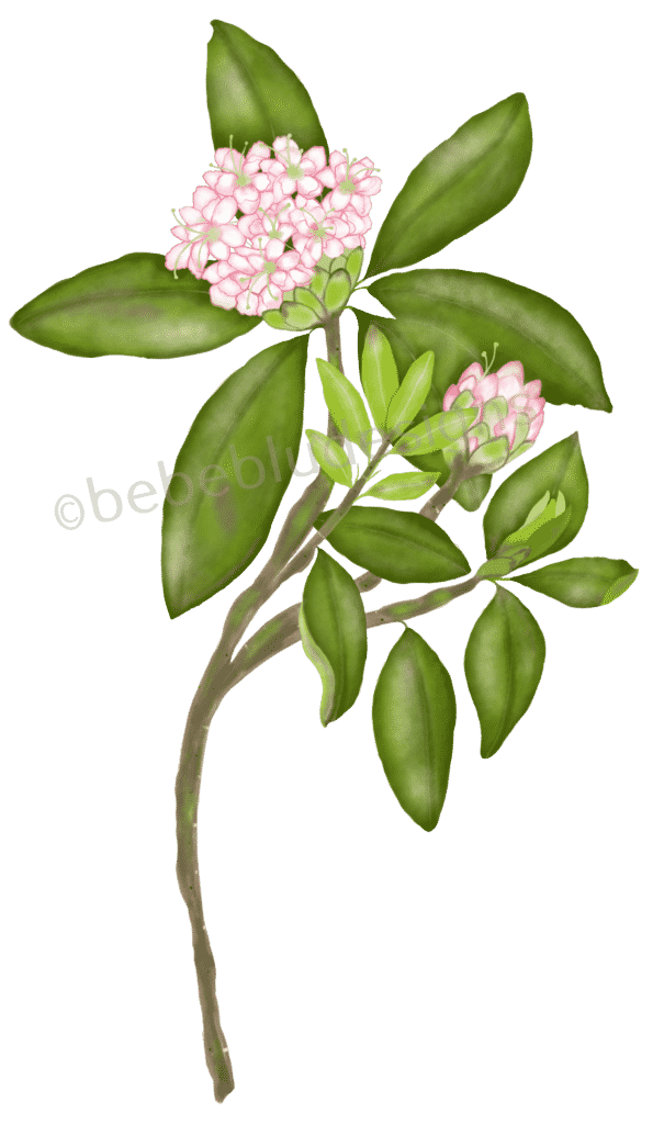 Rhododendron USE more flower old ipad