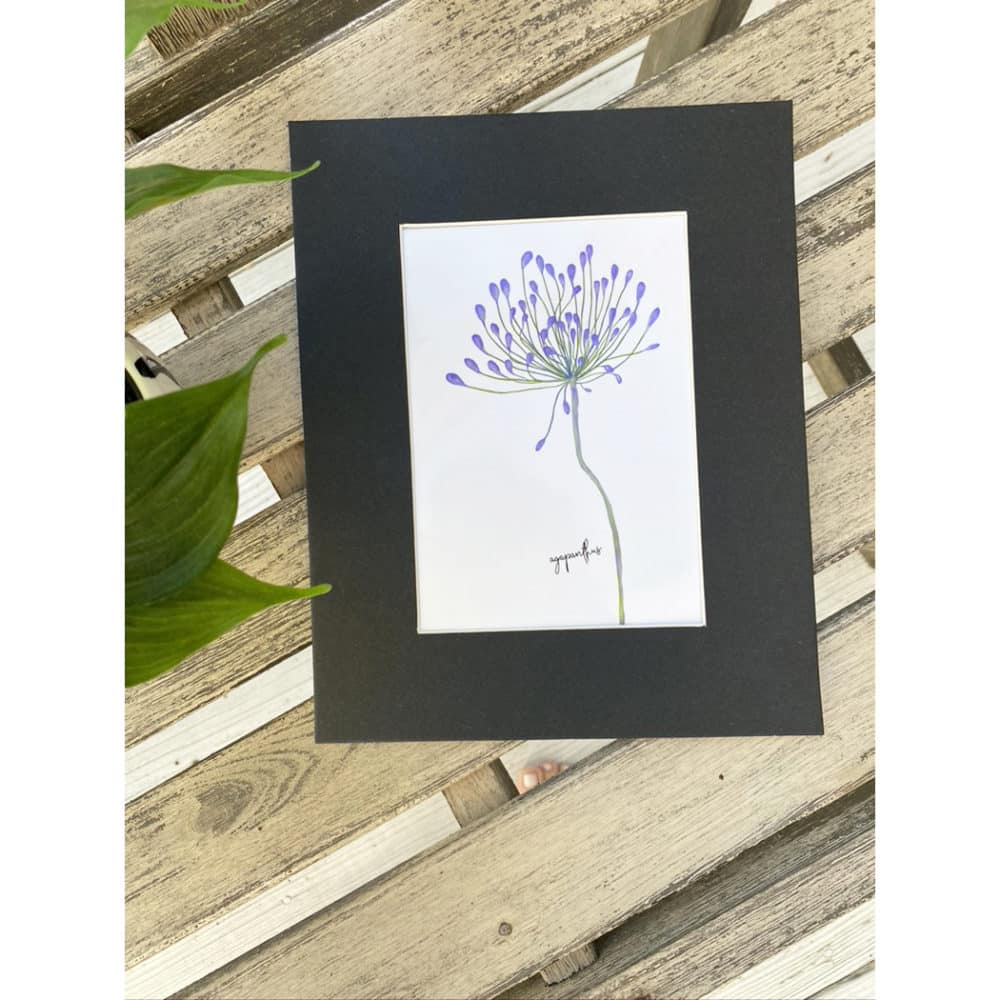 agapanthus matted