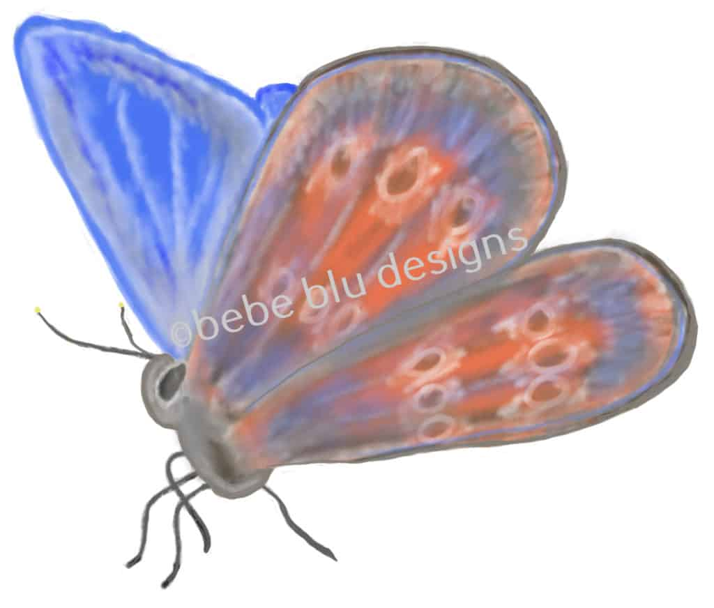 bebeblue designs: butterfly periwinkle artwork