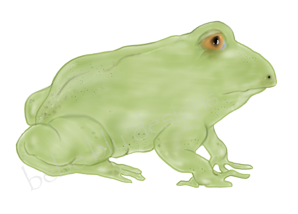 chubby lite frog