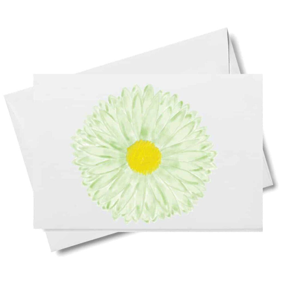 daisy no stem