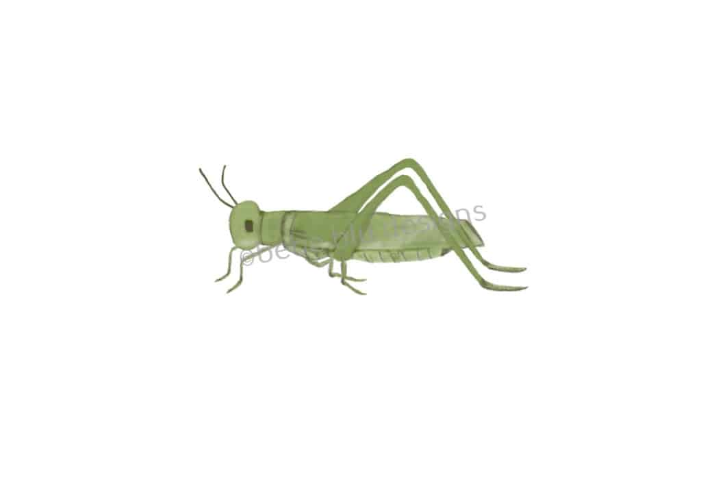 bebeblue designs: grasshopper artwork