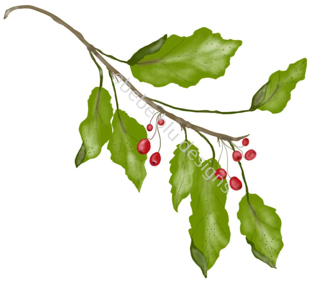 bebeblue designs: holly berries artwork