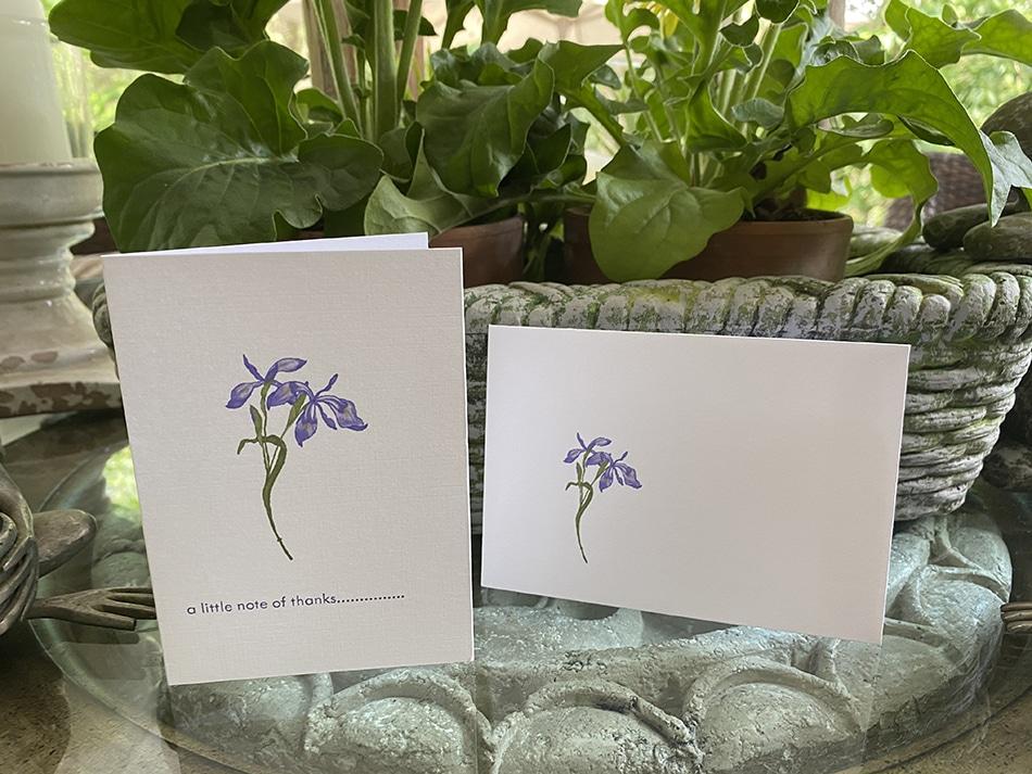 japanese iris petite