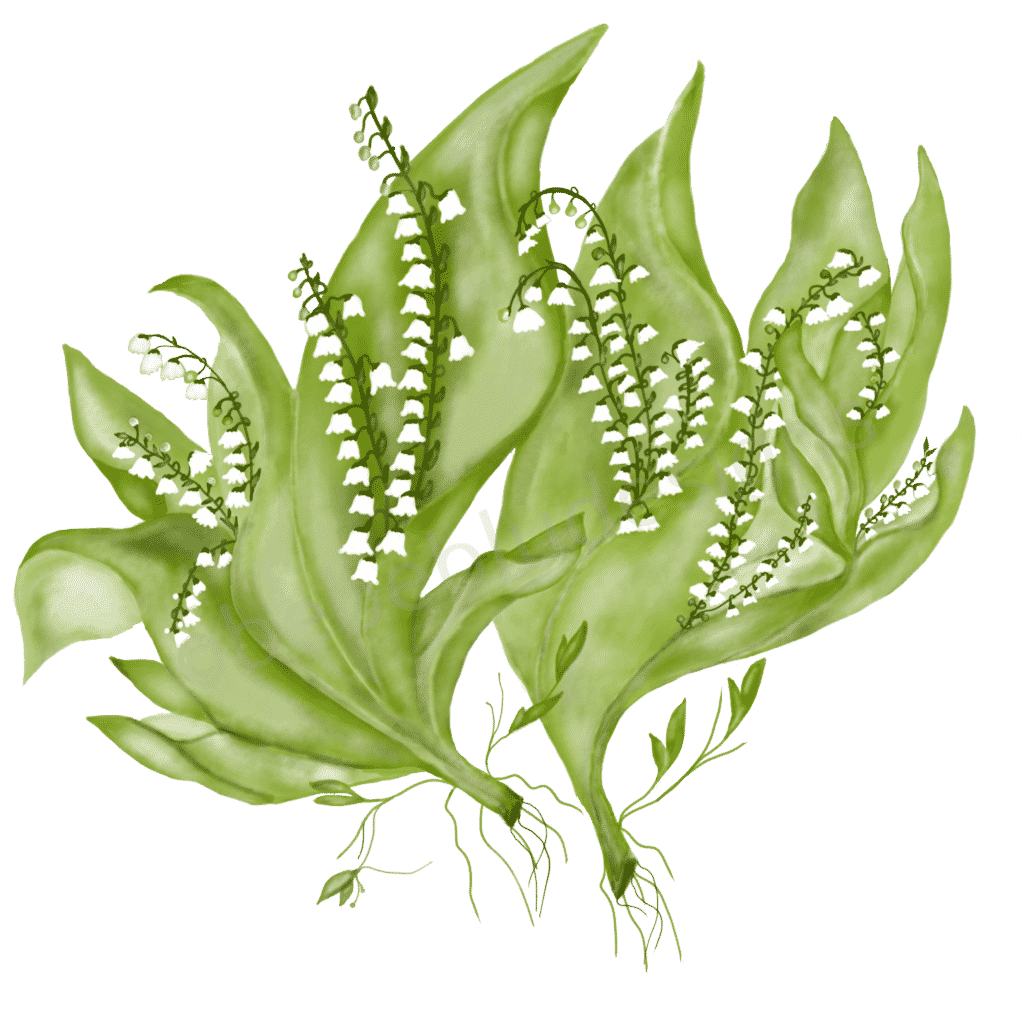 lily of the valley fixed