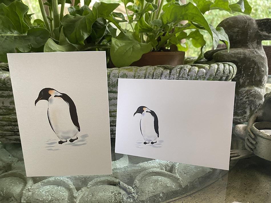 penguin petite