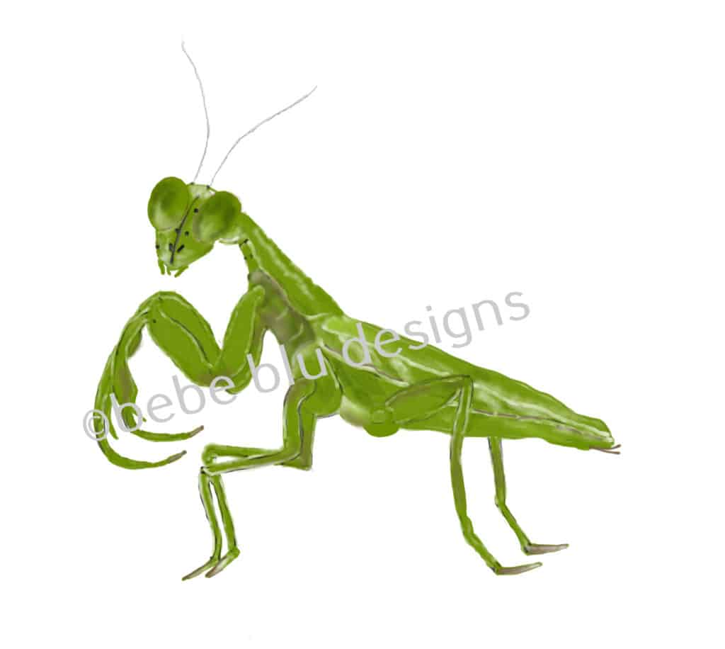 bebeblue designs: praying mantis artwork