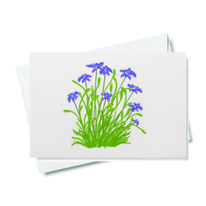 Japanese Iris Gift Enclosure