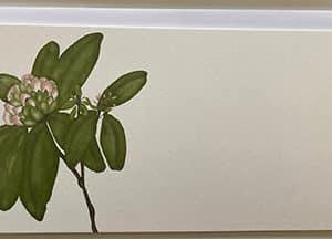 rhododendron slim