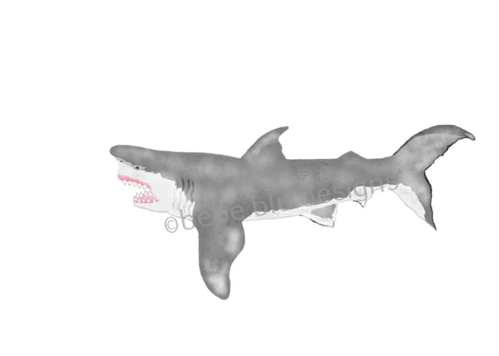bebeblue designs: shark artwork
