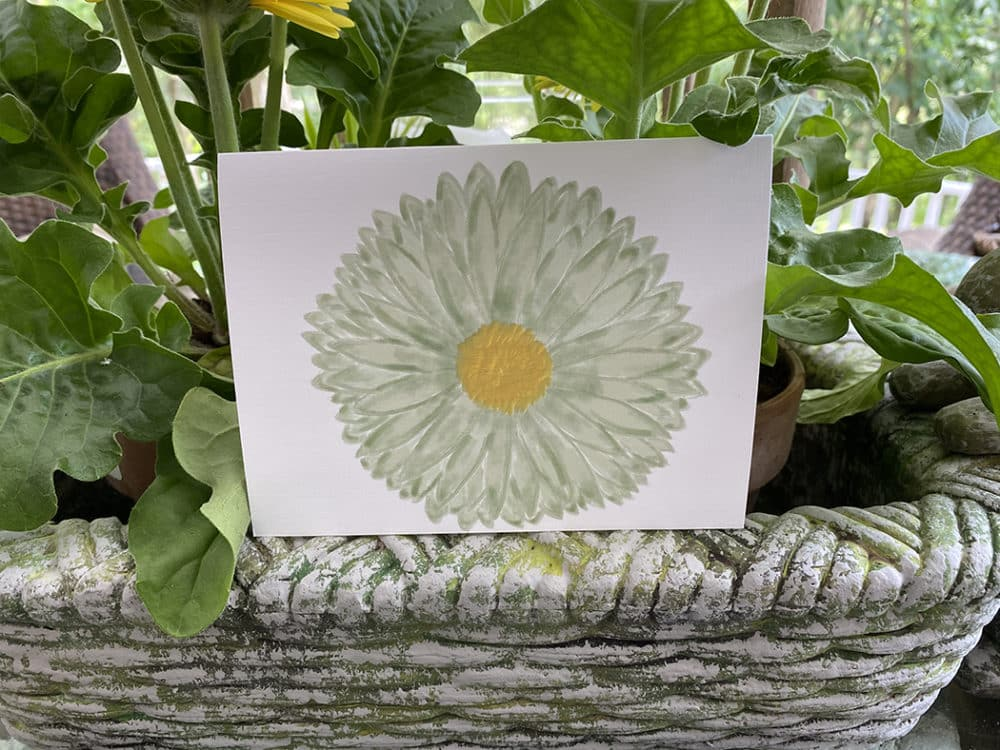 stemless daisy