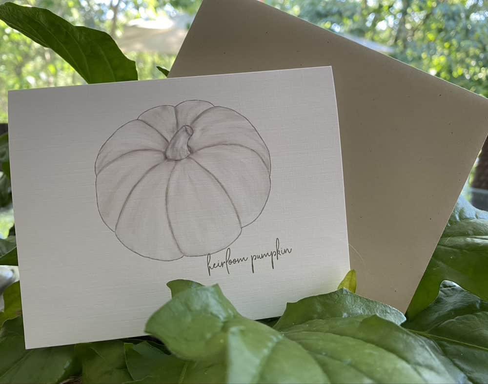 white heirloom pumpkin note cards